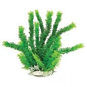 Aquatop Cabomba Like Aquarium Plant Green 12 Inch