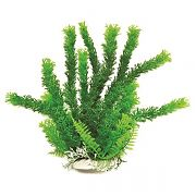 Aquatop Cabomba Like Aquarium Plant Green 20 Inch