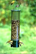 Aububon/Woodlink Bouncer Squirrel Proof Feeder