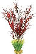 Blue Ribbon Colorburst Florals Water Harvest Plant Red