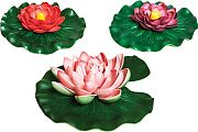 OASE Floating Lily Pad Variety Pack Assorted