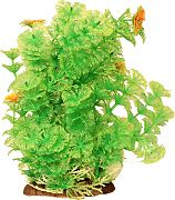 Poppy Bushy Ambuila Aquarium Plant Green 12  Inch