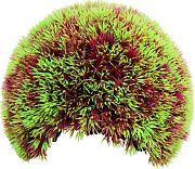 Poppy Moss Cave Hideout Red/Green 4 Inch