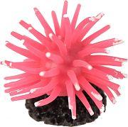 Poppy Sea Anenome Pink Small
