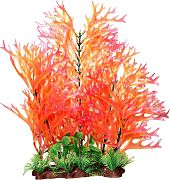 Poppy Sea Fern Aquarium Plant Pink 16 Inch