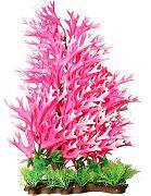 Poppy Sea Fern Aquarium Plant Red 16 Inch