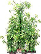 Poppy Specimen Clover Bushy Aquarium Plant Green 14 Inch