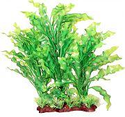 Poppy Specimen Ruffed Sword Aquarium Plant Green 14 Inch