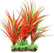 Poppy Specimen Vallismen Aquarium Plant Red/Green 12  Inch