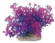 Pure Aquatic Natural Elements Lindernia 5-6 inches