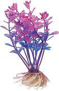 Pure Aquatic Natural Elements Lindernia Technicolor 4.5 inches