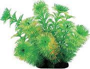 Pure Aquatic Tropical Elements Cabomba Green 5 inches