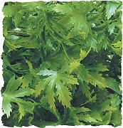 Zoo Med Natural Bush Plants Cannabis Green Large/22 In