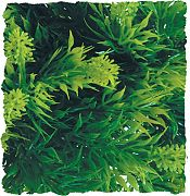Zoo Med Plant Malaysian Fern Small